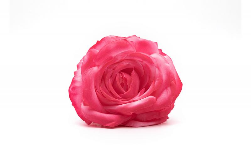 rosa rosa fucsia