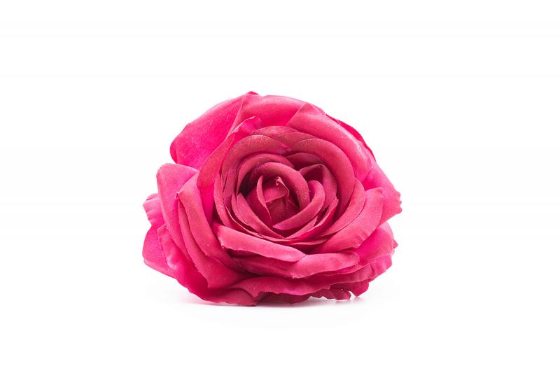rosa buganvilla