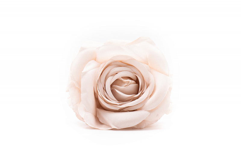 rosa hueso